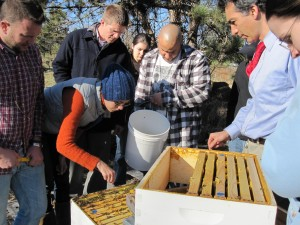 Sondra gently moves bees out of the way while Viktor prepares to pour the liquid syrup into the hive.